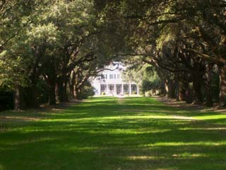 Charles Towne Landing Live Oak Alley