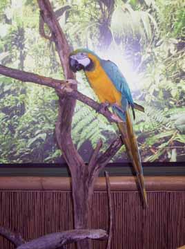Amazonbird
