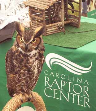 Great_horned_owl_littltle_sreach_owl