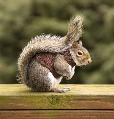 Squirrel_1